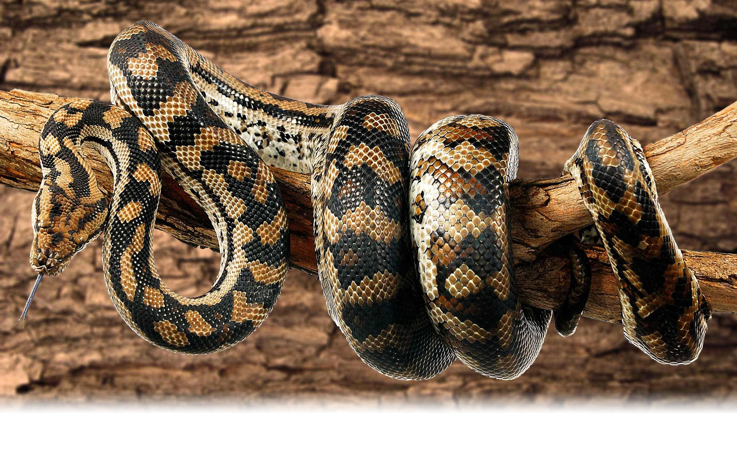 04_python