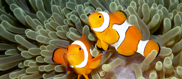Aqualife for What do clown fish eat