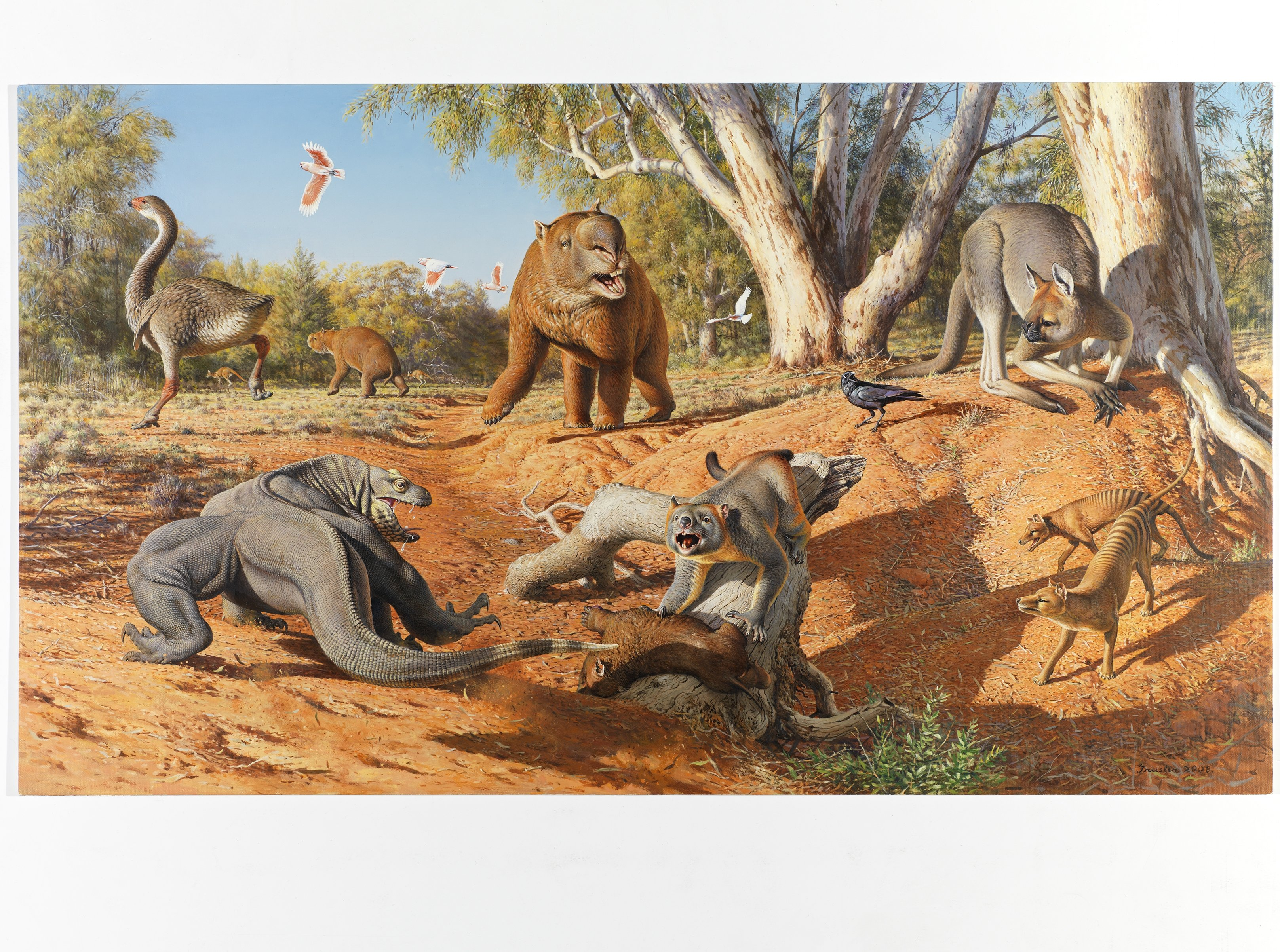 a research on mega fauna extinction in australia Big impact the extinction of australia's megafauna led to major ecological changes and helped create the vegetation we recognise today, new research has found australia's megafauna included giant.
