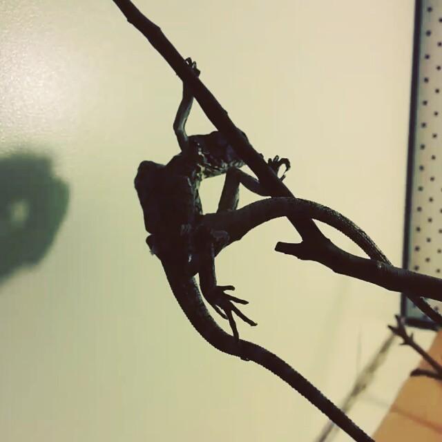Just hanging around...