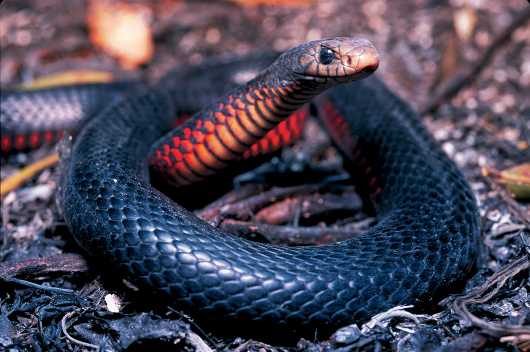 Amazing Wildlife In Your Backyard And Beyond Reptile