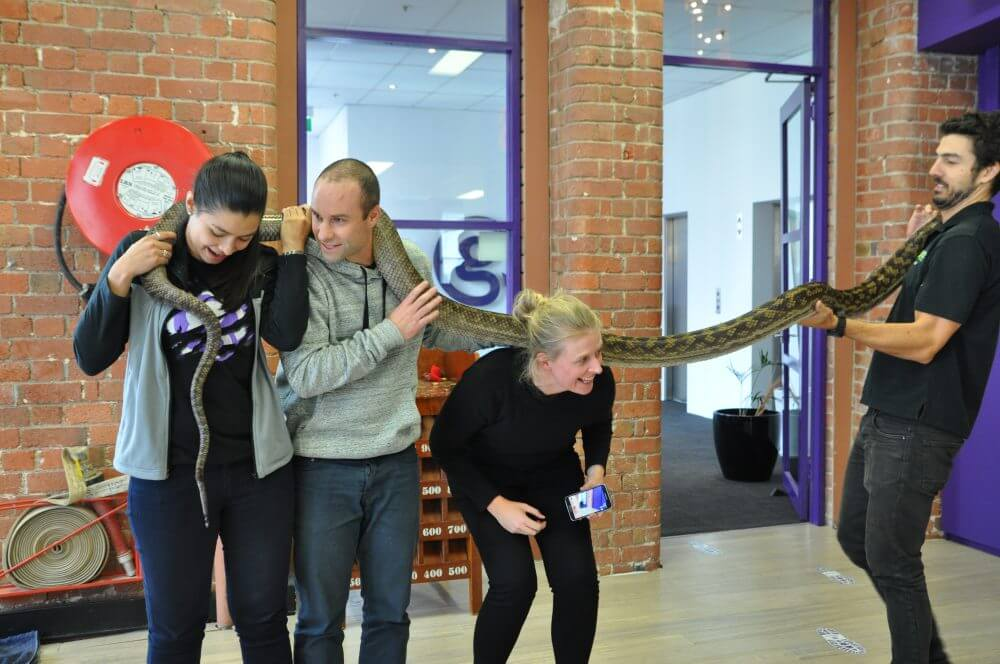 Team building activities in melbourne reptile encounters python challenge freerunsca Images